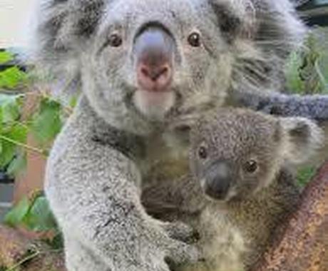オーストラリアでワーキングホリデーをサポートします 不安を解消し、ワクワク楽しい毎日を保証します! イメージ1