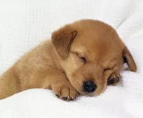 夜中限定〜 眠れない夜に、おしゃべりします 眠れないですね。こんな時は楽しくおしゃべりしましょう! イメージ1