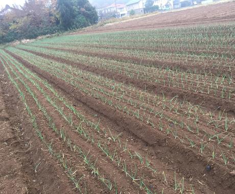 農業の栽培に関することや機械の選び方の提案します 家庭菜園などのアドバイス等も受け付けております。 イメージ1