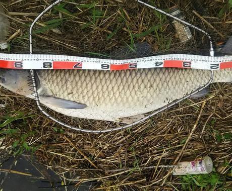 川で巨大魚を釣る釣り方教えます 暖かくなってきました。シーズン到来です(^_^) イメージ1