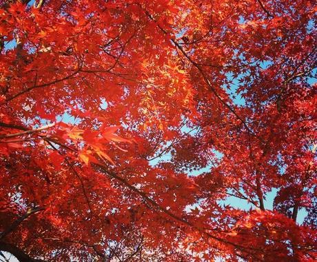 秋の京都観光!教えます 紅葉名所が多数の京都、地元民ならではの選りすぐりの名所紹介! イメージ1