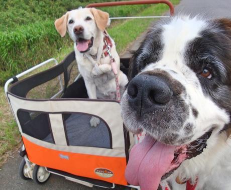 犬を飼っている、飼いたい方のご相談お受けします 愛犬と楽しく幸せに暮らしたい方へ イメージ1
