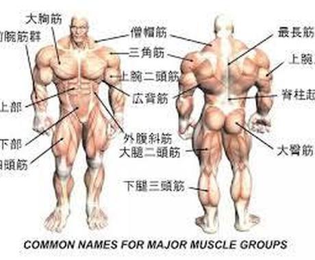 貴方にあった器具を使わない筋トレを伝授します 筋肉を付けたい〜腰痛・関節痛を和らげたいあなたへ イメージ1