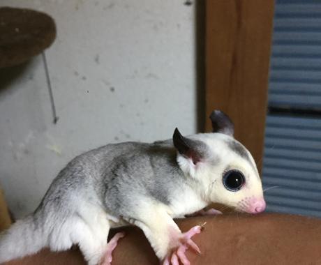 小動物の爪切りのコツ教えます 些細なことでもお気軽にご相談下さいね イメージ1