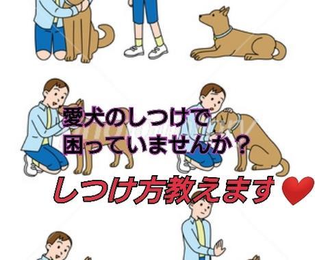 犬のしつけについて教えます あなたのかわいい愛犬のしつけ大丈夫ですか? イメージ1