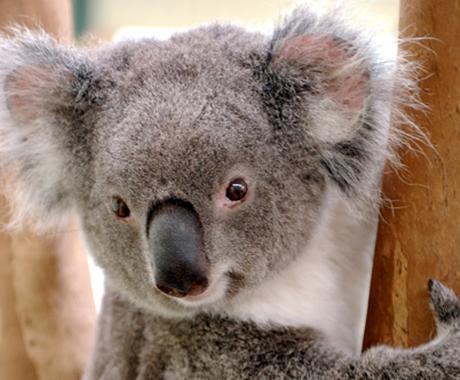 クリエイティブな旅 - オーストラリア(シドニー&メルボルン専門) イメージ1