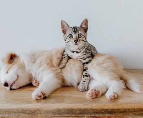 わんちゃんねこちゃんの相談にのります 現役の動物看護士があなたの家族の幸せをサポートします イメージ1