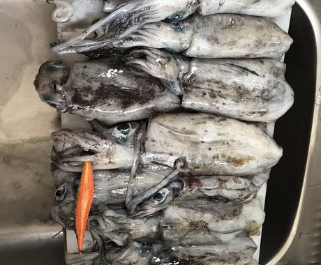 まず一杯アオリイカを釣るためのテクニック教えます 格安エギでも渋い日でもまず釣るためのテクニックです。 イメージ1