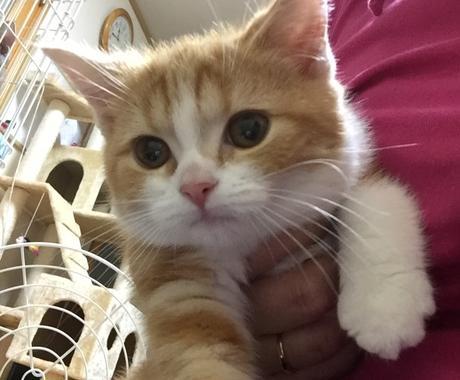 猫の選び方教えます 猫を飼いたいけど、どんな猫がいいのか迷った時に イメージ1