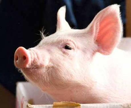 畜産業界へのあなたの疑問にお答えします!消費者としての最低限の知識をもてます! イメージ1