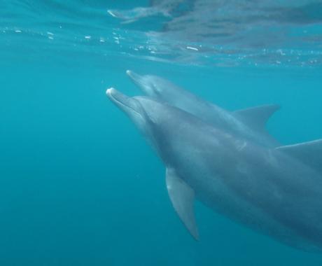 日本で週末だけを使ってイルカと泳ぎに行ける旅のプランをご紹介します。 イメージ1