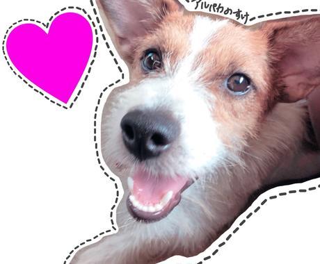 ペットの躾け方をお教えします 修行中訓練士が愛犬との上手な付き合い方をレクチャー イメージ1