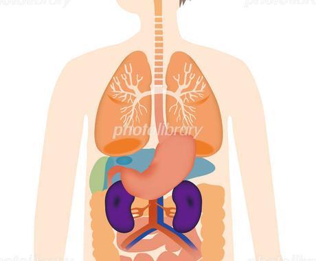 医療秘書技能検定の領域Ⅱ《解剖、生理》教えます 検定対策や解説をわかりやすく❣お伝えしてサポートします イメージ1