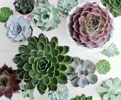 観葉植物相談に乗ります♪グリーンの悩みや相談受け付けております。   イメージ1