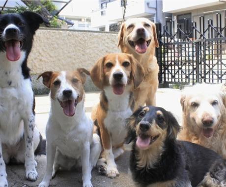 動物看護師が犬、猫、小動物の飼い方アドバイスします ペットの飼い方や付き合い方に悩んでる方! イメージ1
