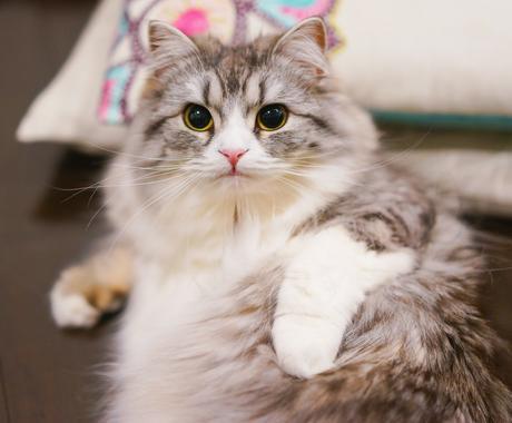 大切なペットちゃんの気持ちを通訳いたします ~動物さんの心とお話しするアニマルコミュニケーション~ イメージ1