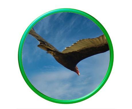 あなたの背中に羽を授けます 飛び込みたい、、でも勇気が、、そんなあなたに羽を授けます イメージ1