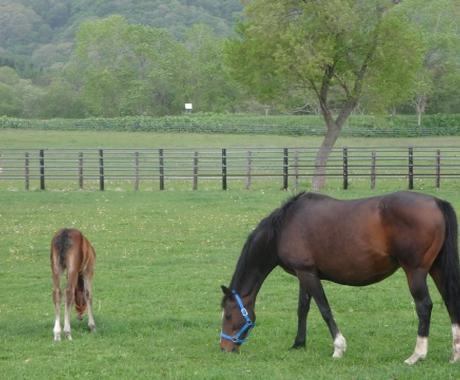 競走馬(一口クラブの募集馬)の血統診断を承ります 一口馬主の募集馬の血統診断を行います。 イメージ1