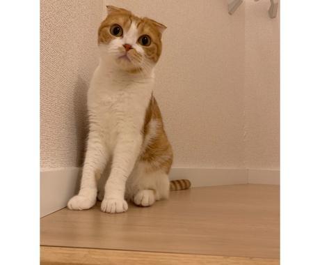 あなたのペットちゃんの気持ちがわかります アニマルコミュニケーションでペットちゃんとの絆を深めよう イメージ1