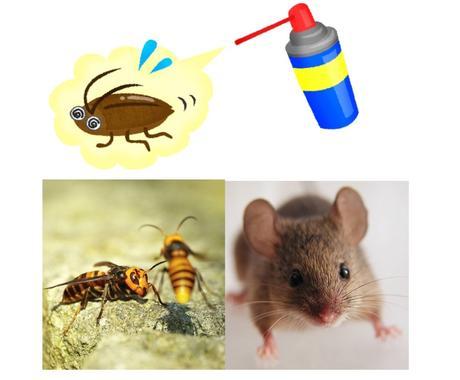 あらゆる害虫対策・ネズミ対策お答えします 害虫やネズミでお困りの方にプロがサポートします! イメージ1