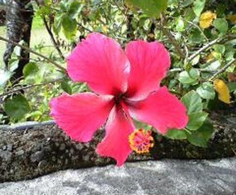 沖縄に旅行に行かれる方に、沖縄在住の私が、あなたにあったオススメプランを提案します。 イメージ1
