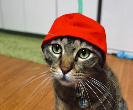 わんちゃん猫ちゃんの飼育・しつけの相談承ります 現役獣医師が日々の疑問に寄り添います イメージ1
