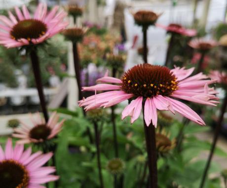 ガーデニングや庭造りのご相談乗ります ガーデニングや植物について、庭造り、一週間質問し放題!! イメージ1