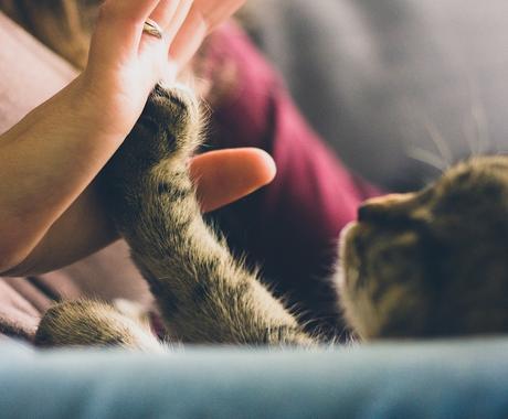 タロット占い✰*。ペットのお気持ち占います あの子は楽しく暮らせているかな? イメージ1