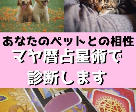 大切なペットとあなたの相性をマヤ暦占星術で占います マヤ暦占星術を使い、ペットの持つ性格や相性を導き出します イメージ1