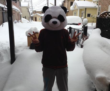 パンダが占いとか全くできないけど前世教えますパンダ イメージ1