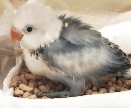 小鳥と仲良くなる方法!インコや文鳥などを飼ってみたい方の相談所。15年程の経験を元にアドバイス! イメージ1