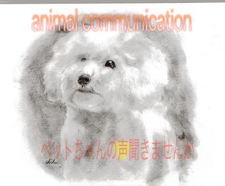 ペットちゃんとお話します ペットの本音を聞いてみませんか? イメージ1