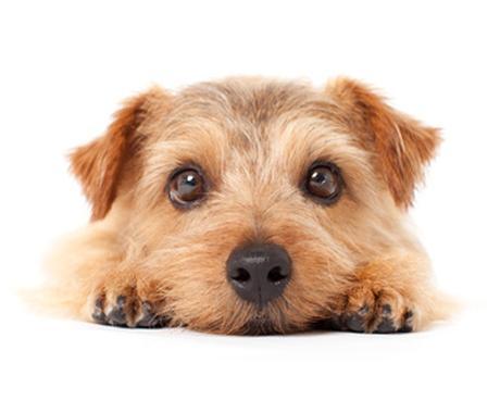 ペットと飼い主が幸運になる姓名判断&命名致します あなたのペット病弱じゃないですか?姓名判断致します。 イメージ1