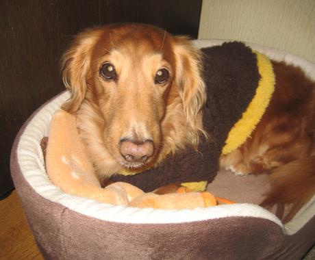 犬のしつけサービス イメージ1