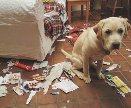 ペットのプロが、お悩み・相談、なんでも受け付けます 飼い主様に寄り添い、わかりやすく丁寧にお応えします☺︎ イメージ1
