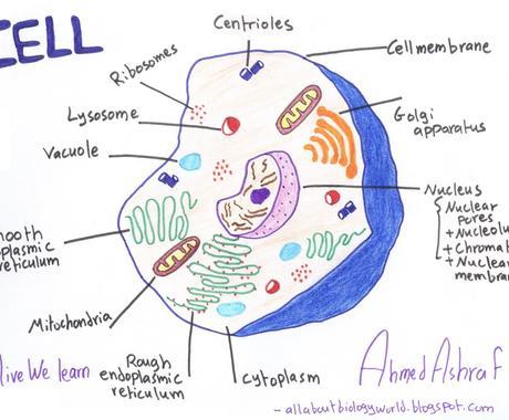 医学・生物学の世界、わかりやすくお伝えします テストや受験、授業、講義課題など、様々な学習をサポート! イメージ1