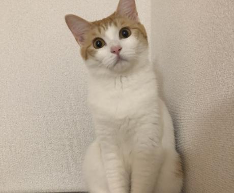 猫ちゃんの飼い方教えます 猫ちゃん保護したけどどうしよう!?まずは何が必要か教えます✨ イメージ1