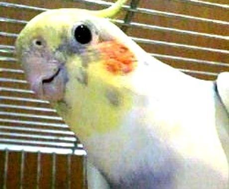 インコ、猛禽類の飼い方、育て方についてお答えします イメージ1