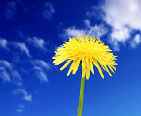 人生相談+チャネリングいたします ◆◆◆今より少しでも心が軽くなるお手伝いを、貴方と一緒に… イメージ1