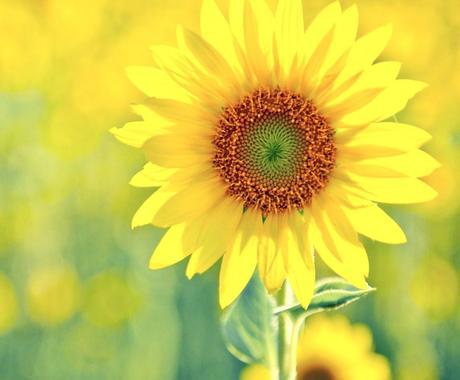 心の奥の本当の思いを見つけるお手伝いをします 本音に気付くほど、幸せに近づきますよ✨ イメージ1