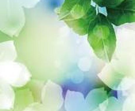 ☆あなたの植物に元気を♪自称植物マスター(笑)が一緒に考えます☆ イメージ1