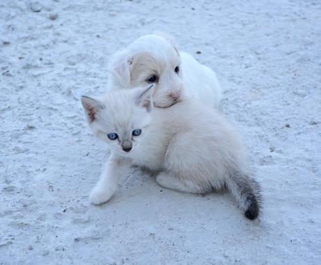 犬・猫のお世話!分からないところ教えます ご自身で飼うのが初めての方の疑問を解決します! イメージ1