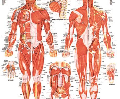 健康をお手伝いします 筋トレ、ダイエット運動に関する悩みのエトセトラ イメージ1