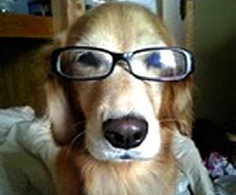もう悩まない、犬のしつけ!おすすめの本を紹介します! イメージ1