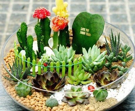 植物を育てるのが苦手!皆様へ適したアドバイスをさせて頂きます。(観葉植物、花、家庭菜園など) イメージ1