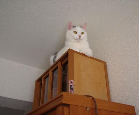 ズバリ!うちの7キロ超級のでぶ猫が占う!お腹ナデナデ占い! イメージ1