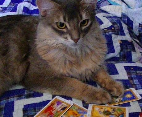 幸運の白猫タロット 最適スプレッドで占います 本当に占いが必要な方のみご利用ください イメージ1