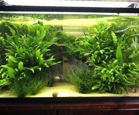 熱帯魚や海水魚 水草水槽の作成維持等教えます 美しい水草水槽や飼育全般に関して イメージ1