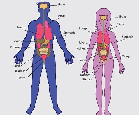 """健康は""""人間を知る""""ことで手に入ります 代替医療の普及活動を行う医療従事者、トレーナーが徹底解説 イメージ1"""