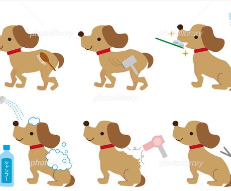 愛犬のお手入れの相談、お答えします 見習いトリマーが、犬のケアの悩み、教えます イメージ1